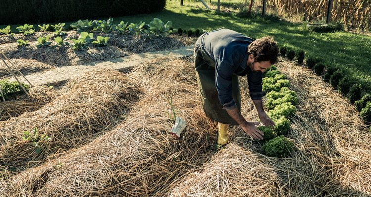 Permaculture realizing that food comes from the ground not a store for Culture permaculture
