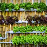 Vertical gardens are the key to self-sufficiency in the city