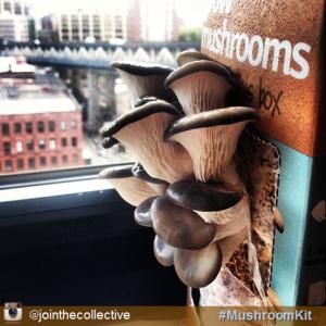 growing-mushrooms-in-coffee-grounds_3