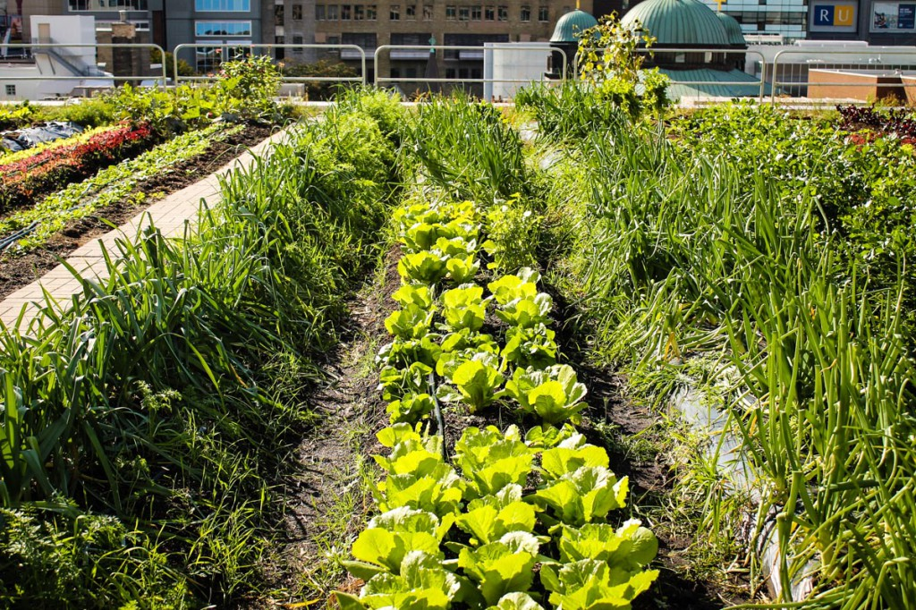 Urban Agriculture_Global Issues
