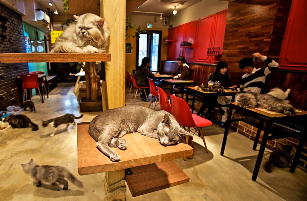 Cat Cafe_Toronto
