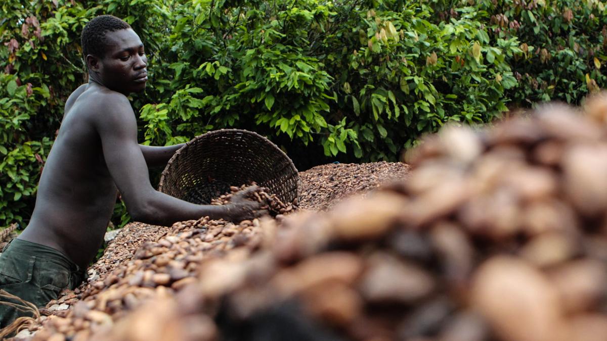 Cocoa Bean Farmers_Plaid Zebra