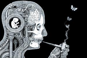 The Brains of Pot Smokers_Plad zebra