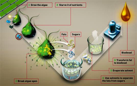 3_convert algae into crude oil