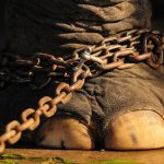 Circus animals are banned in the UK