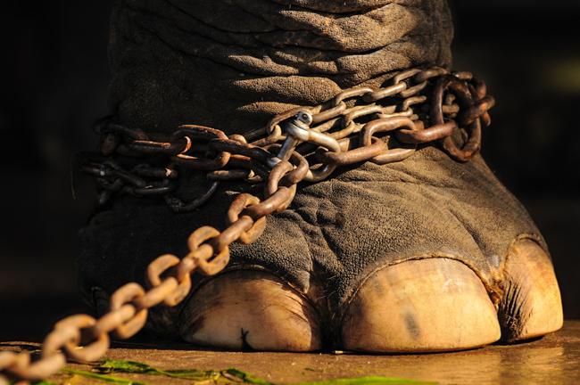 Circus animals_Plaid Zebra