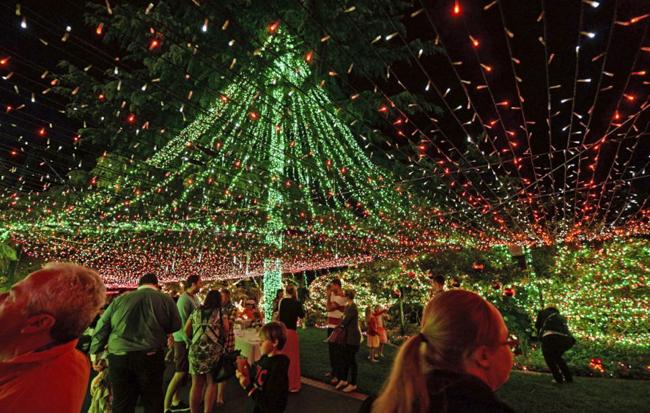 largest Christmas lights display_Plad Zebra