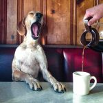 This café lets you play with puppies while you drink your coffee