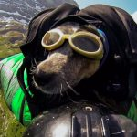 This filmmaker goes BASE-jumping with his dog in a wing suit (Video)