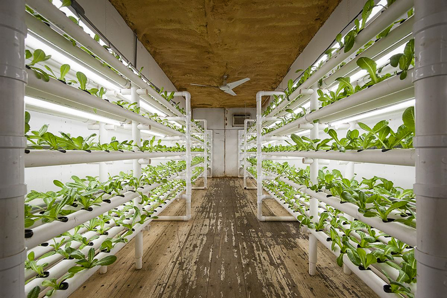 Greenhouse room gardens - Freight Farms Are The Portable Weather Proof Future Of