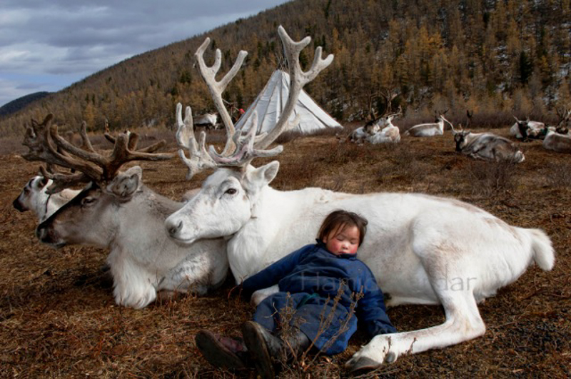 mongolian_04