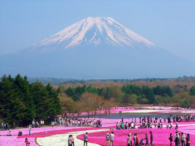 13_The Fuji Shibazakura Festival (Japan)
