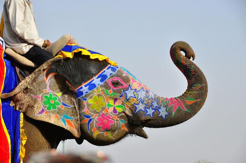 16_Jaipur Elephant Festival (India)