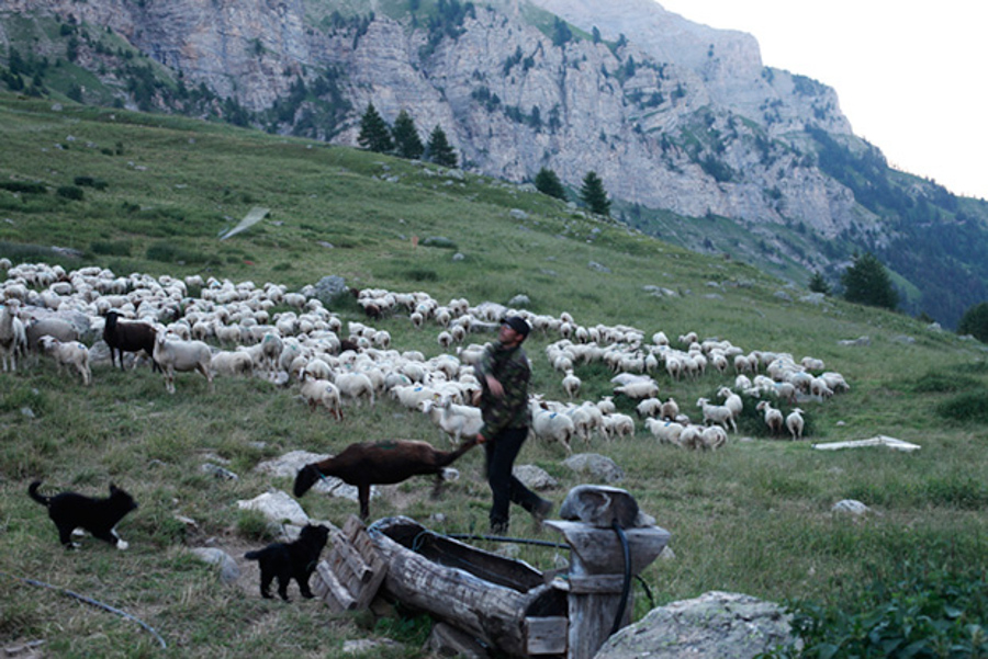 18_shepherd in the Alpes