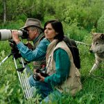 The couple from Idaho who changed the way we think about wild wolves (Photos)