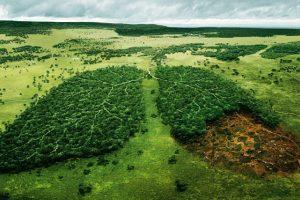 1_Earth's sixth mass extinction
