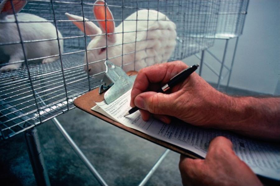 2_animal testing new zealand