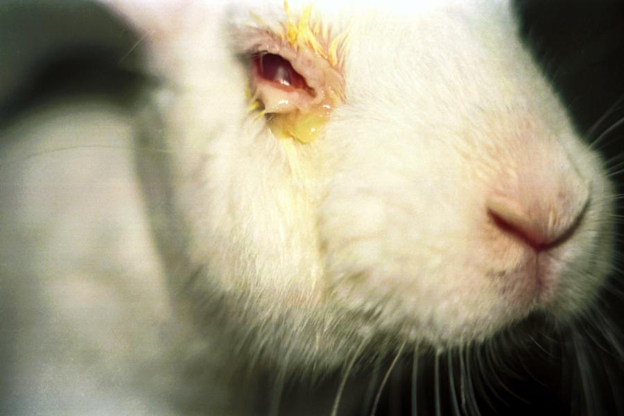 4_animal testing new zealand
