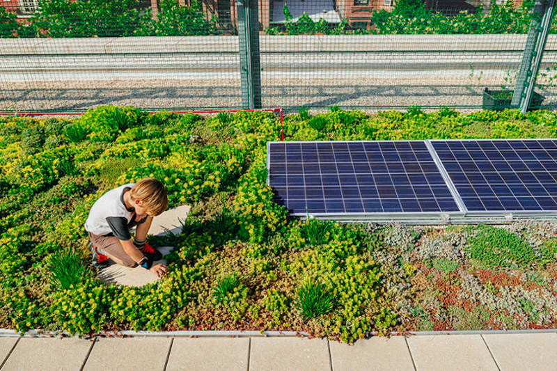 6_solar green roofs NYC