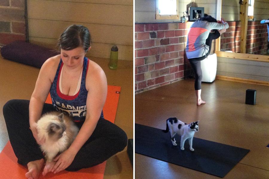 6_yoga cats
