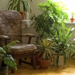 NASA's guide to the best air-filtering plants to have in your home