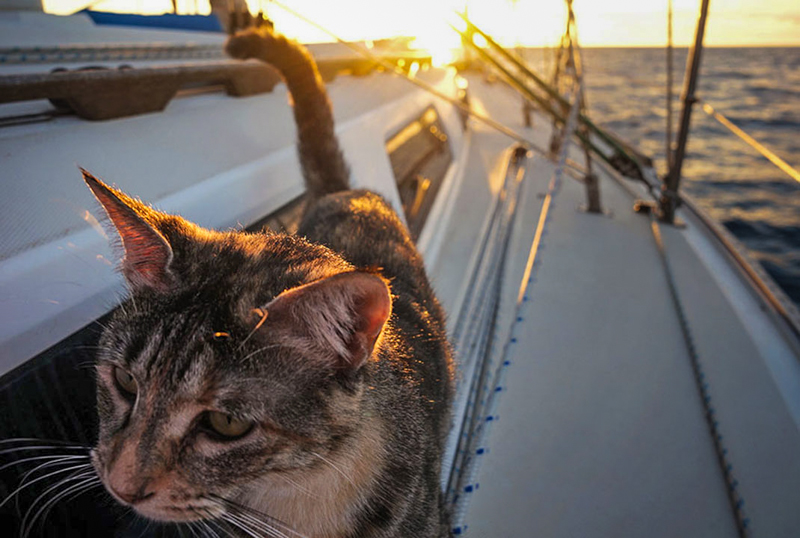12_Couple Sails around world with their cat