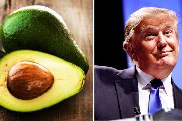 1_Avocado vs donald trump