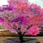 You might want this tree that grows 40 different kinds of fruit in your backyard (Video)