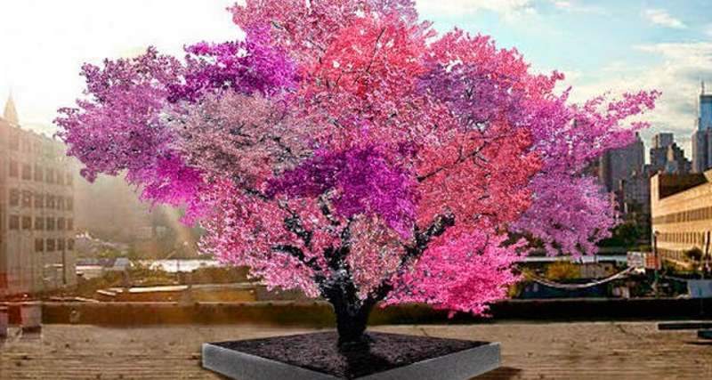 1_fruit tree