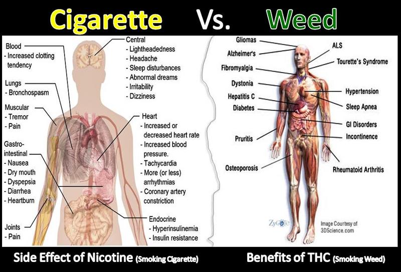 4_big tobacco