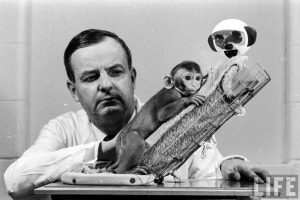 5_Harlow's infamously cruel experiments