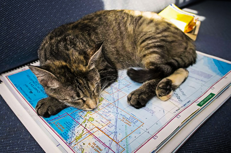6_Couple Sails around world with their cat