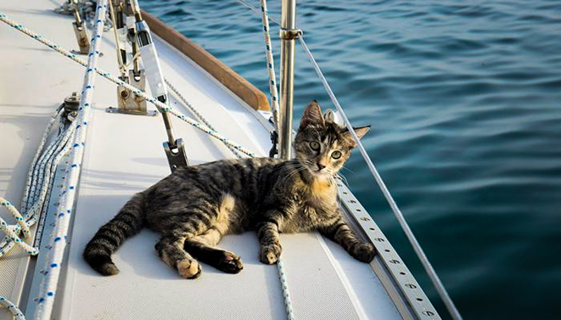 7_Couple Sails around world with their cat