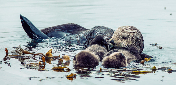 4_otters_lower carbon dioxide
