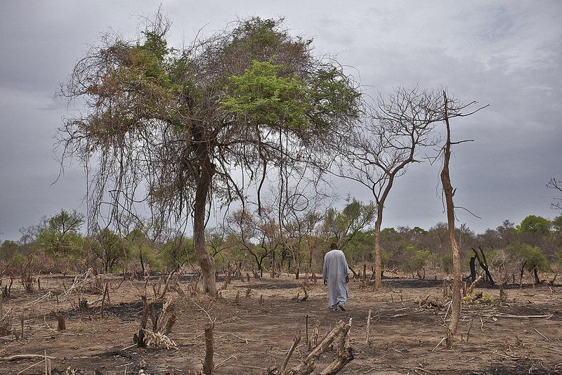 4_planting trees