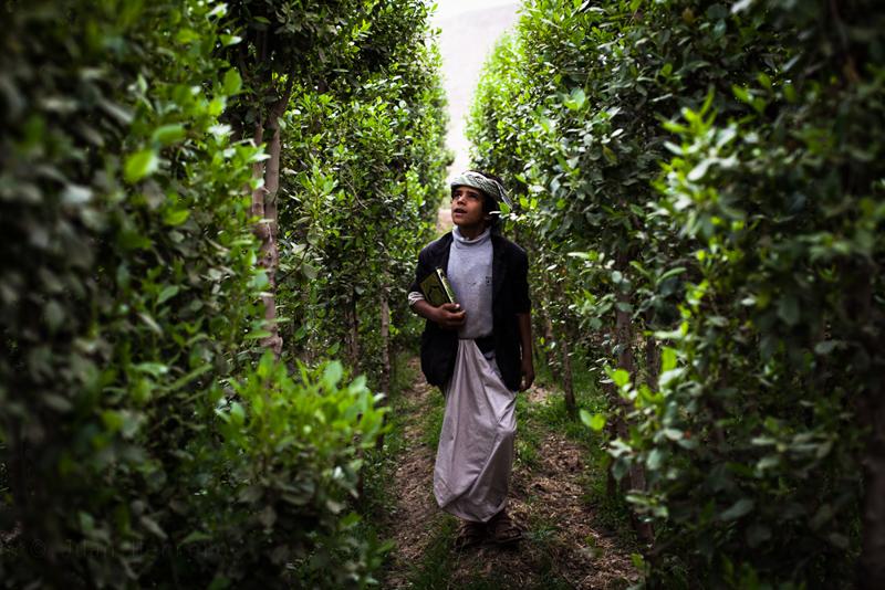 9_plant draining Yemen economy