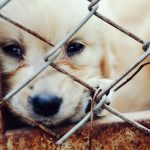 Arizona raises a middle finger to puppy mills with a law that pet stores can only sell shelter dogs