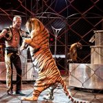 The Netherlands just banned wild animals from being used in circuses