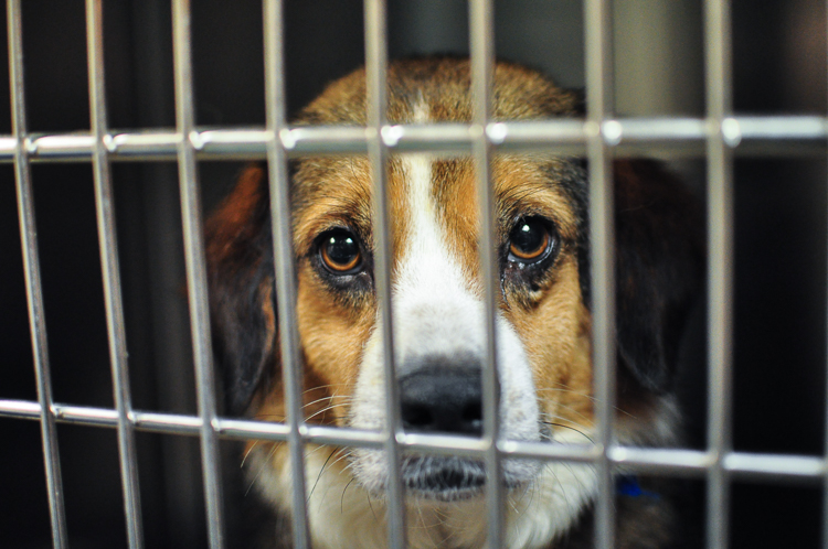 arizona raises a middle finger to puppy mills with a law. Black Bedroom Furniture Sets. Home Design Ideas