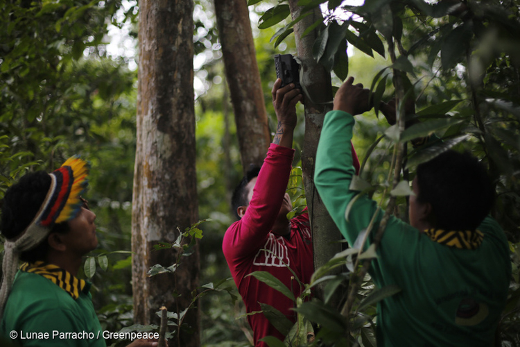 6_Brazil's forest villagers Illegal Loggers