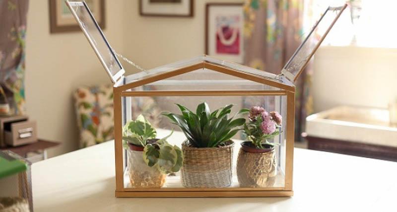 ikea s mini greenhouse lets you grow your favourite plants socker sklen 237 k ikea
