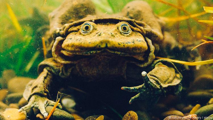 3_Frog Juice satisfy their lovers