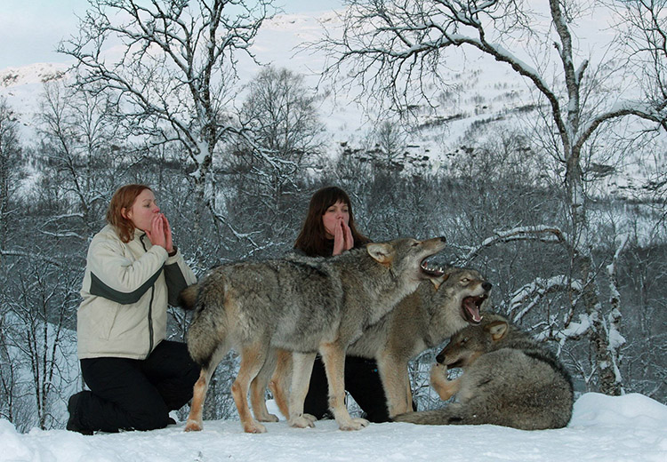 6_cuddle with wolves