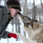 This wolf sanctuary lets you watch the northern lights while you cuddle with wolves