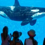 SeaWorld is now getting rid of its killer whale show entirely – but only in San Diego