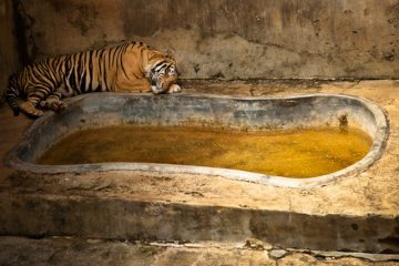 1_zoos are more like animal prisons