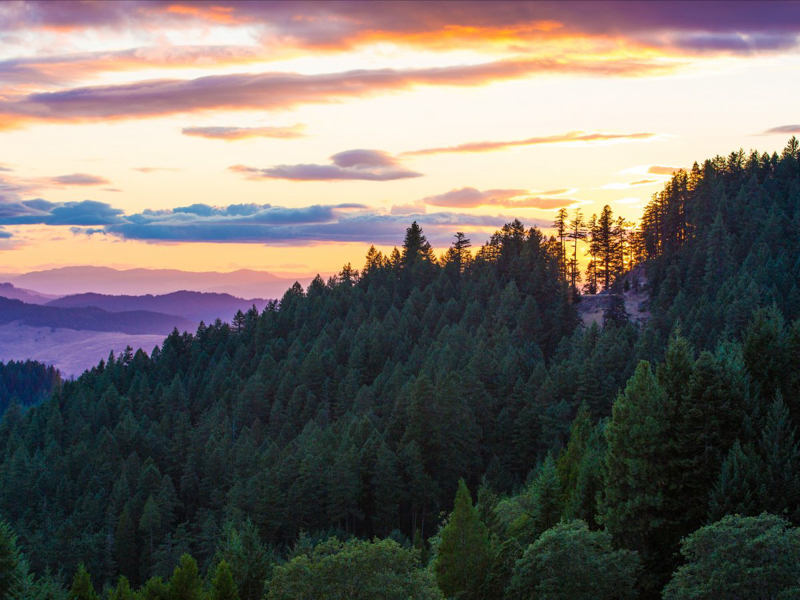 9_fire lookout_Oregon Forest