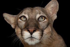 1_endangered-animals