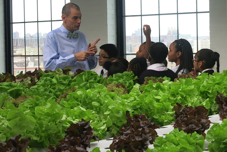 1_Edible Wall Bronx school