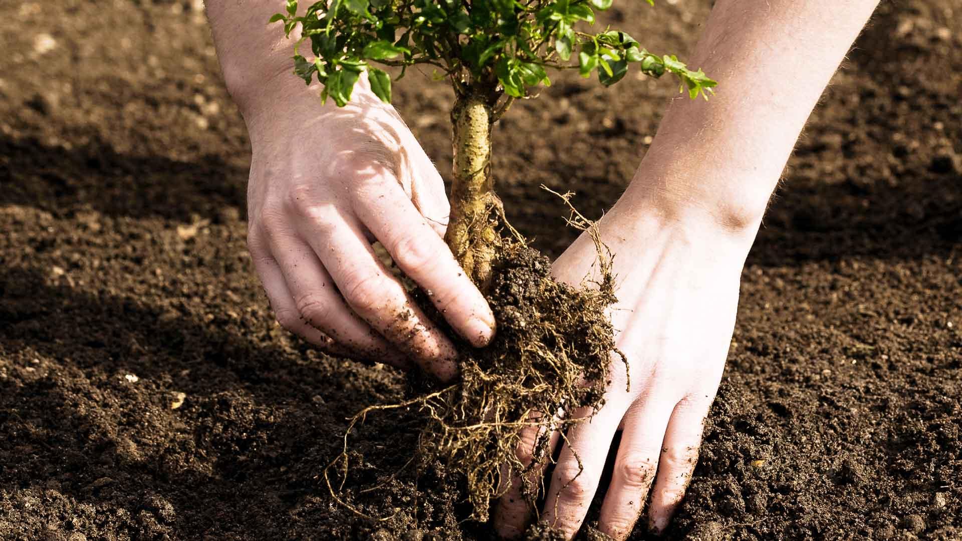 3. tree planting